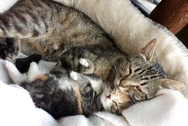 gato dormindo junto
