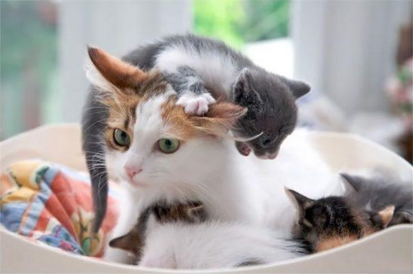 gato na cabeca