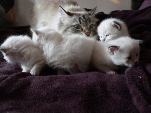 gato tomando conta