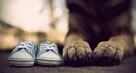 anuncio_gravidez_cachorro